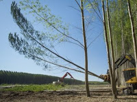 The Environmental Benefits of Forestry Investments