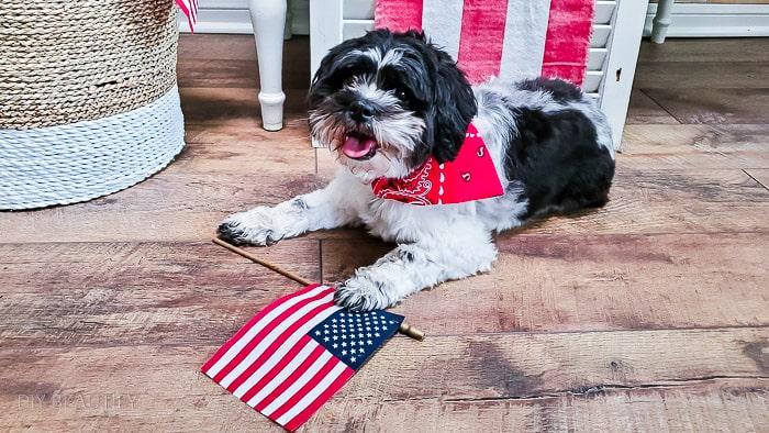 pup showing American pride