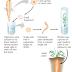 Kloning organisme : Kloning tanaman dan  kloning hewan (katak, domba dolly)