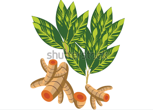 3d illustration turmeric root
