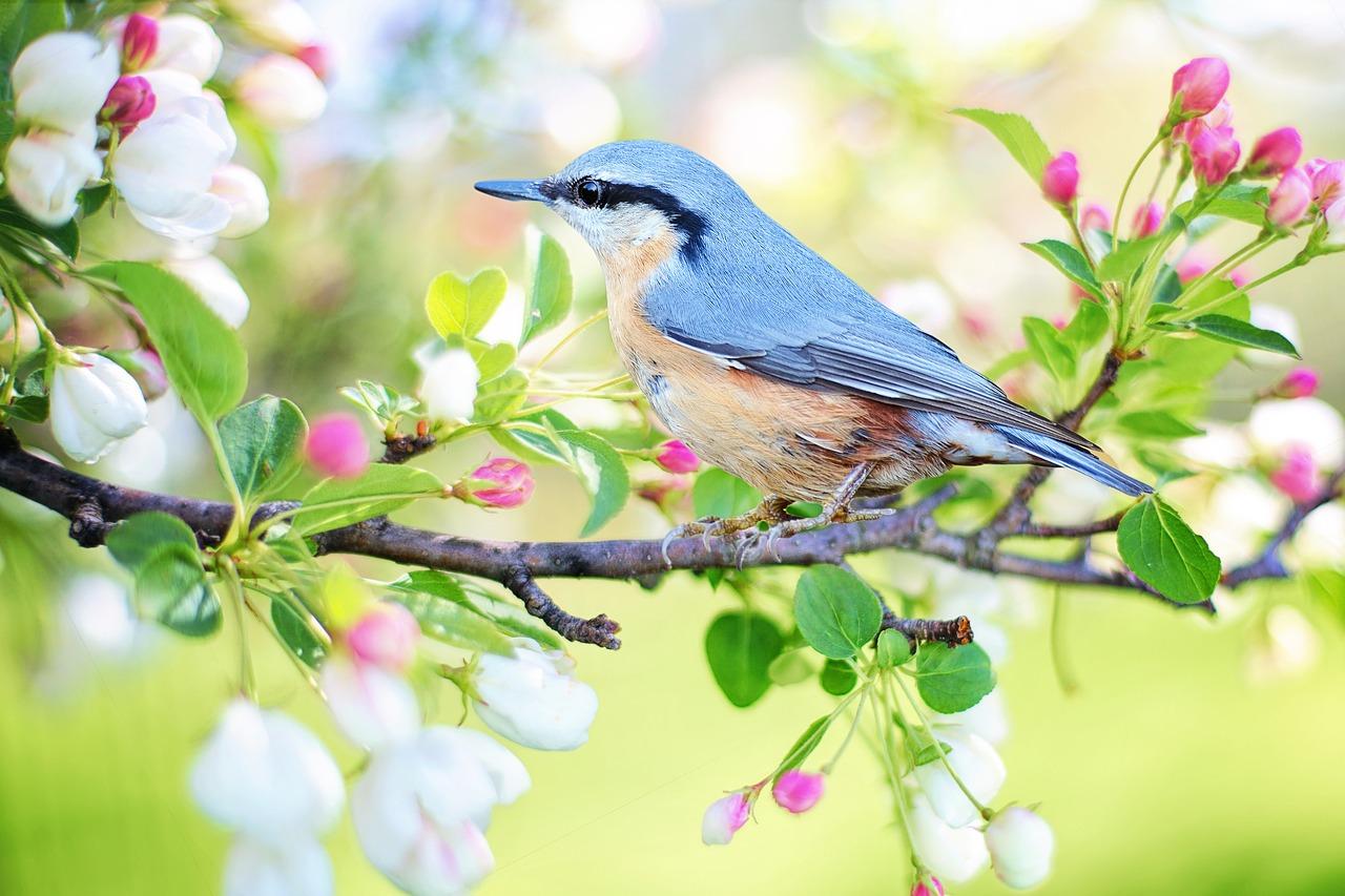 Kata Kata Mutiara Burung Untuk Status dan Caption