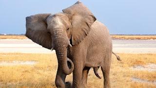تفسير حلم الفيل في المنام