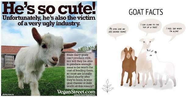 vegan capricorn