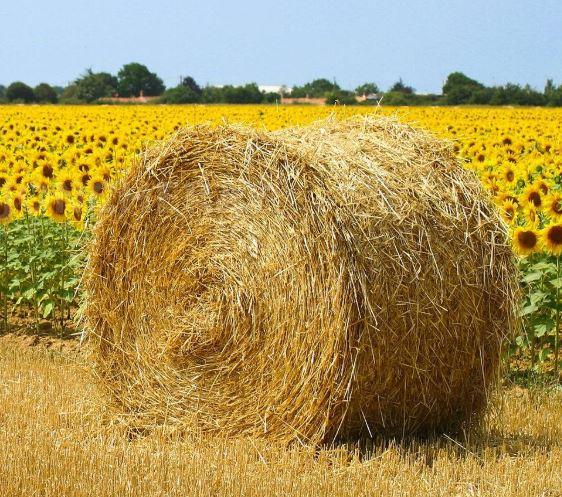 أكثر الدول اعتمادا على الزراعة