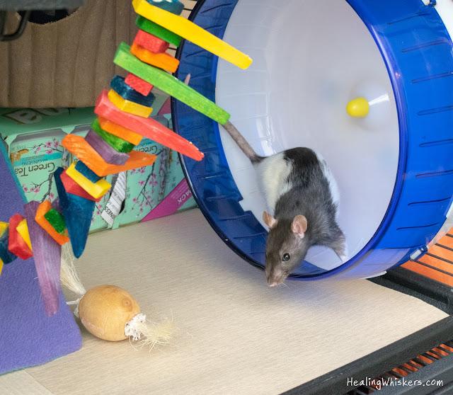 absorbent rat cage liner