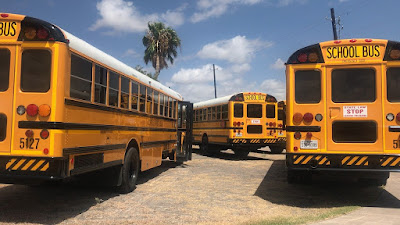 a group of 4 school buses, seen from the back