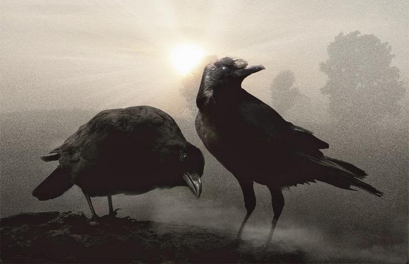Hugin e Munin: Os Corvos Informantes de Odin