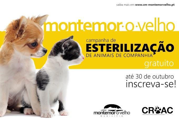Montemor-o-Velho promove Campanha de Esterilização gratuita de animais de companhia