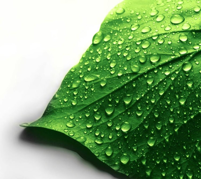 Green Leave Macro HD Wallpaper for Mobile Phone
