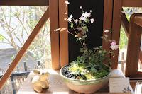 山野草盆栽の完成作品(台湾バイカカラマツ ヘビイチゴ チシマタンポポ)
