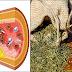 Limpia tus arterias y vasos sanguíneos con estas 7 hierbas medicinales