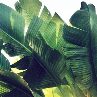 Greenery Pantone Colour of the Year 15-0343 Tropical Leaves Plant