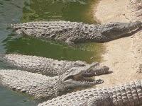 Krokodilleparken på Gran Canaria
