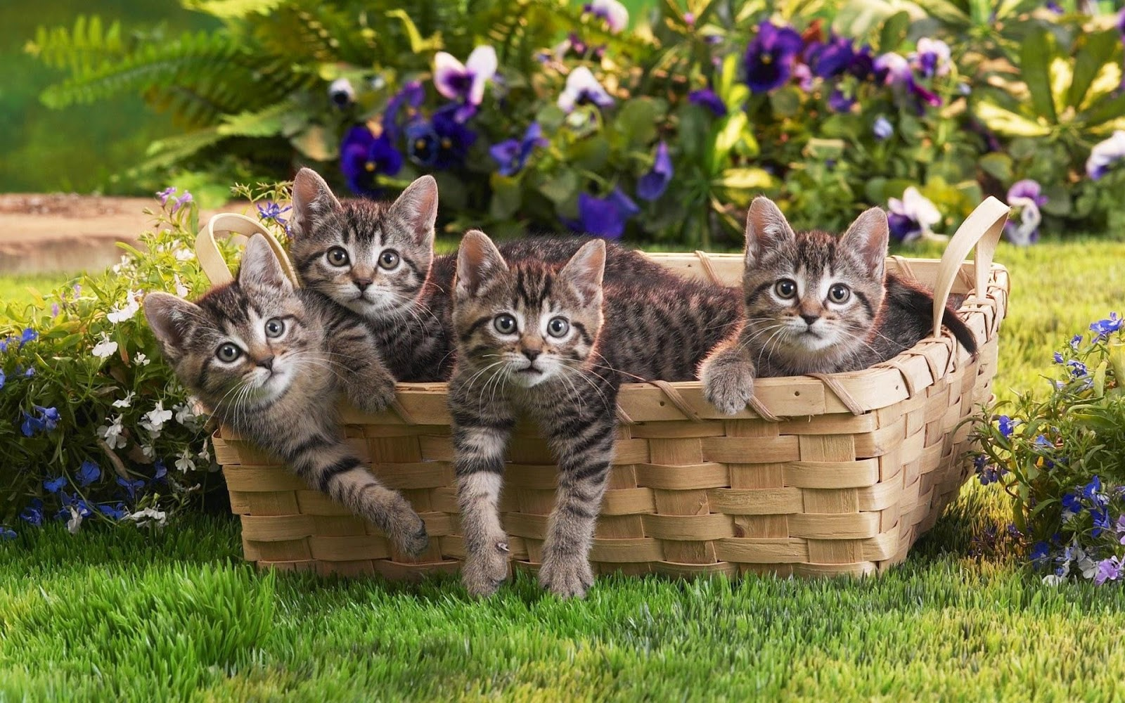 Cute cats 5 cute cats for Gatti sfondi desktop gratis