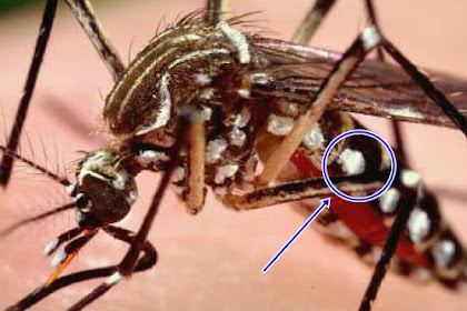 Seekor Nyamuk Diletakkan Di Bawah Mikroskop, lalu Diperbesar 400 kali! Dan Inilah FAKTA yang Akan Mengejutkan Anda !!! TERNYATA.....