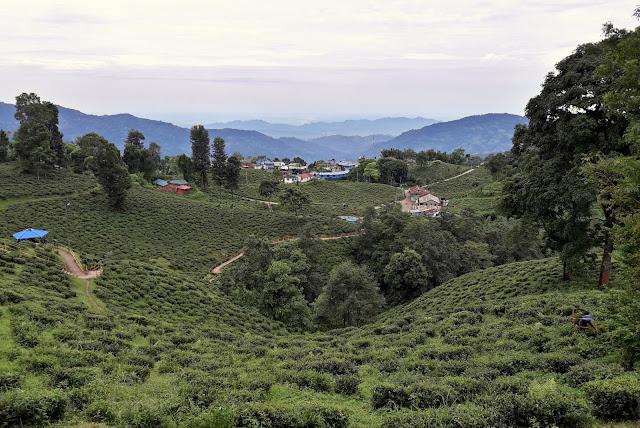 Darjeeling hills, Terai and Dooars: In a state of limbo