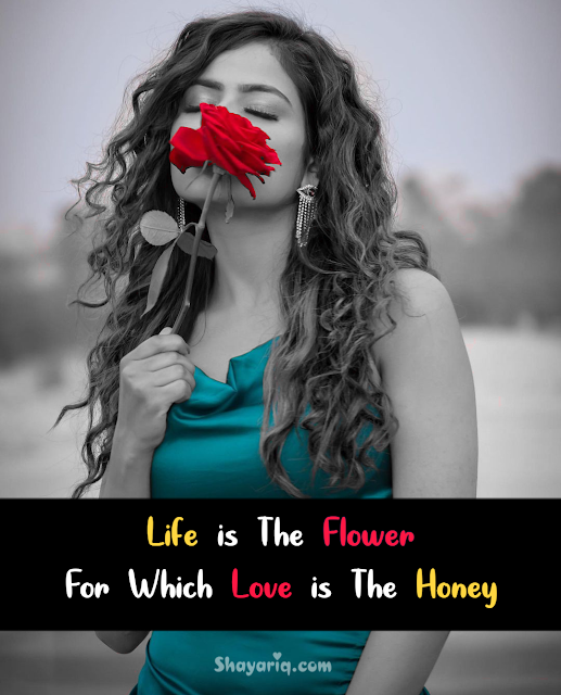 Love Quotes for her and Him , love quotes, Quotes on Love, Quotes on life, Quotes on photo, love shayari in English, new Quotes, Quotes, Quotes on flower