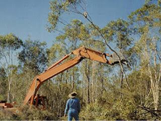 Hilangnya habitat merupakan ancaman terbesar bagi Koala