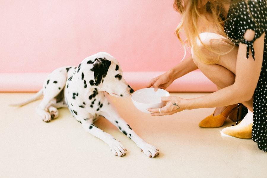 Ile posiłków powinien jeść pies, jak często karmić psa