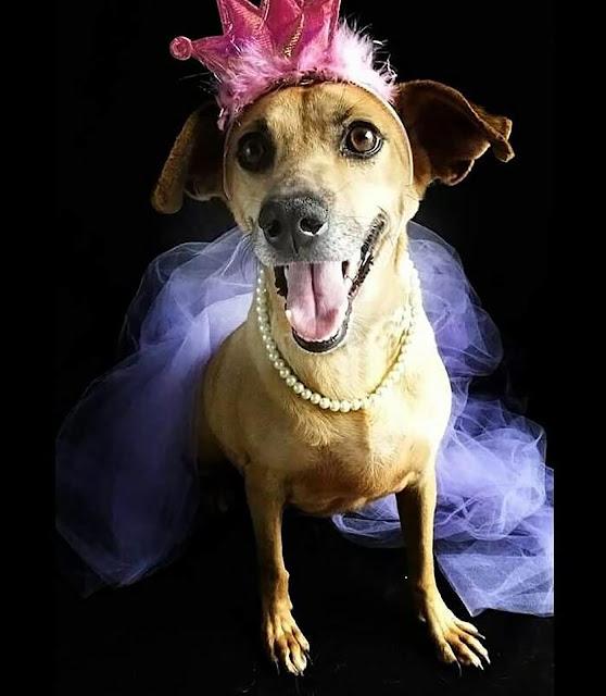 Center Shopping Rio promove 'Campanha de Adoção de Cães e Gatos'