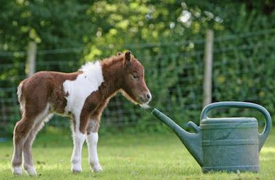 falabella atı