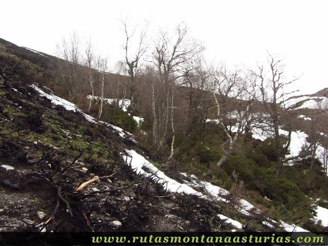 Atravesando monte quemado hacia la braña Chauchina