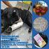 Jacobina: Ação solidária com intuito de salvar vida da cachorrinha 'Preta'