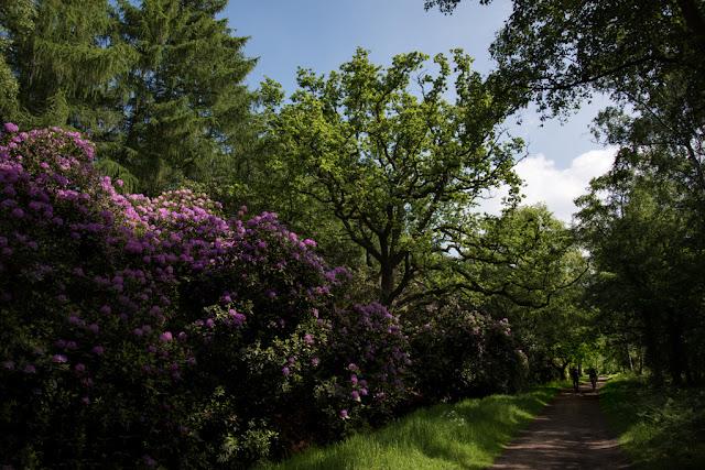 Woodhall Spa woods