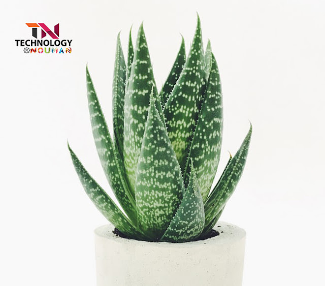weight loss aloe vera benefits, aloe vera gel,