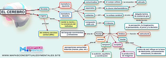 Mapa conceptual del cerebro y sus funciones