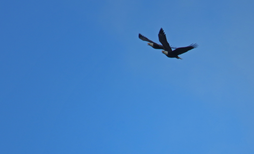 Life, Birding, Photos And Everything-3891