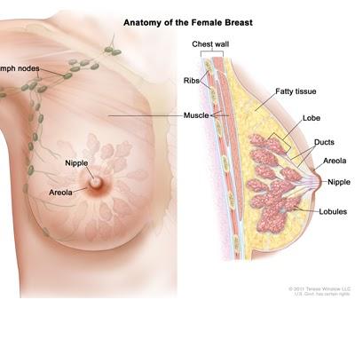 Biopsy Breast Market Procedure Key Trends, Segmentation, Demand, Report and Regional Growth to forecast by 2027