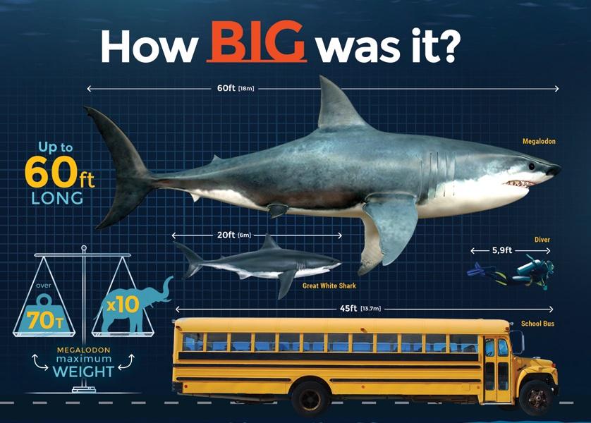 Megalodon Hiu Raksasa Masa Prasejarah