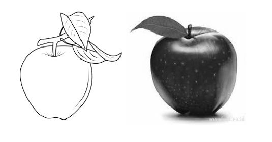 Contoh Print Dua Gambar Apel