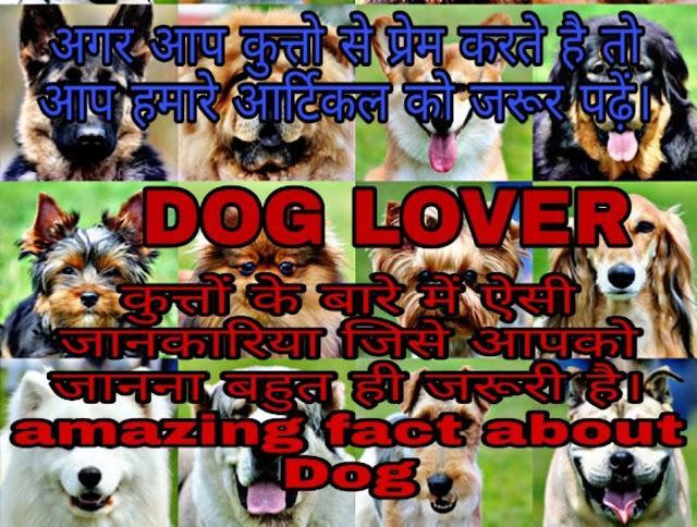 Amazing facts about Dog in hindi.( कुत्तों के बारे में रोचक जानकारी जिसे जानकर आप हैरान रह जाएंगे )