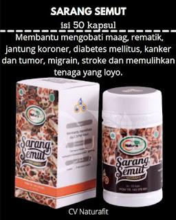 Kapsul Sarang Semut