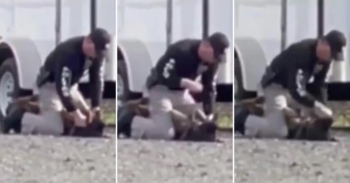 Police Officer Caught On Camera Punching His Crying Police Dog In The Face