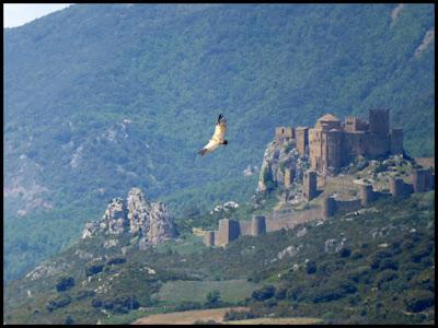 Castillo de Loarre y buitre