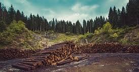 Pembukaan Wilayah Hutan (PWH) merupakan salah satu kegiatan membuka lahan untuk dimanfaatkan baik sebagai hutan tanaman produksi maupun sebagai wilayah perkebunan dan yang lainnya. Fungsi, peran dan tujuan PWH pada dasarnya sebagai penunjang peningkatan ekonomi masyarakat. Fungsi, peran dan tujuan adanya pembukaan wilayah hutan dapat diuraikan sebagai berikut: