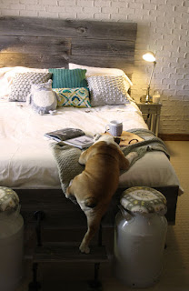 cão subindo na cama