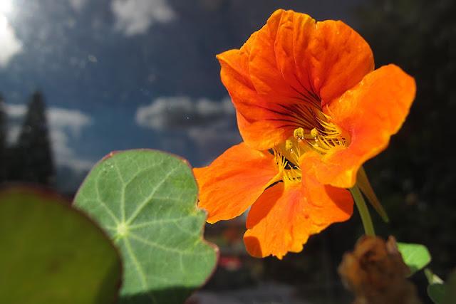 de mooiste foto's uit mijn tuin van oktober 2012