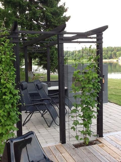Klatrestativer  - tips og ideer i mengder. Anordning for klatreplanter kan også brukes som skillevegg. Furulunden.