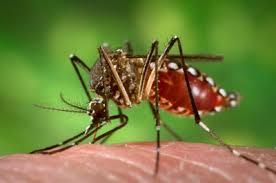 Phun muỗi tại quận Tây Hồ