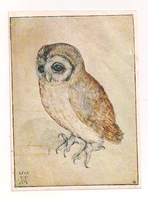 1508 Owl Little Owl Coruja DW