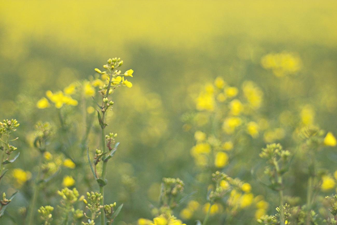 Zum Tagesabschluss: Heute in Gelb