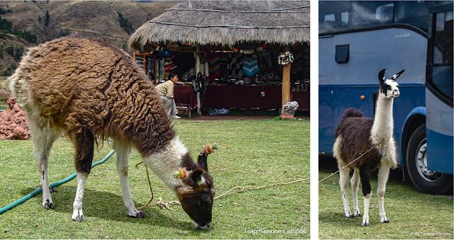 Lhamas em um restaurante de Sicuani, na estrada entre Puni e Cusco