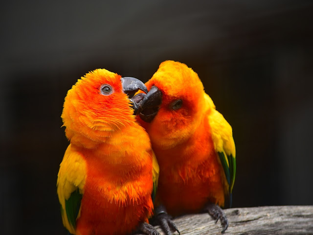 100+ Love Bird Images wallpaper free download HD
