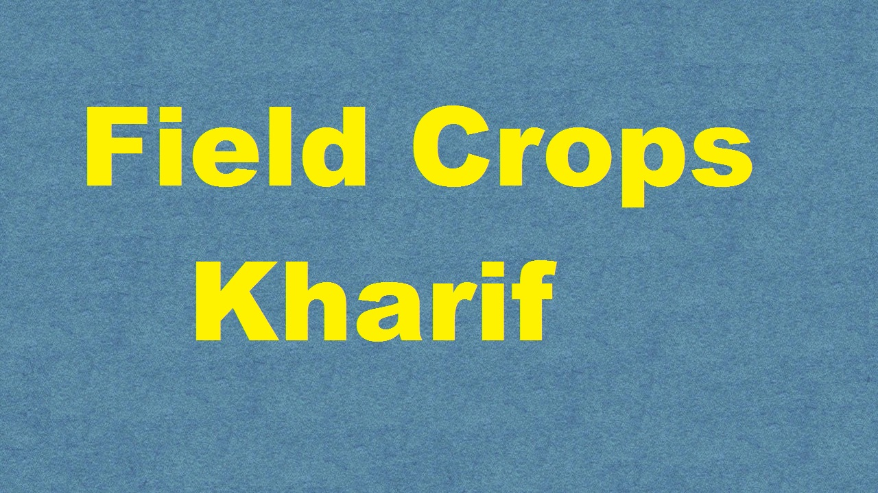 Field Crops Kharif ICAR E course Free PDF Book Download e krishi shiksha
