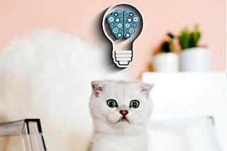 10 consejos para mantener el cerebro de tu gato siempre joven