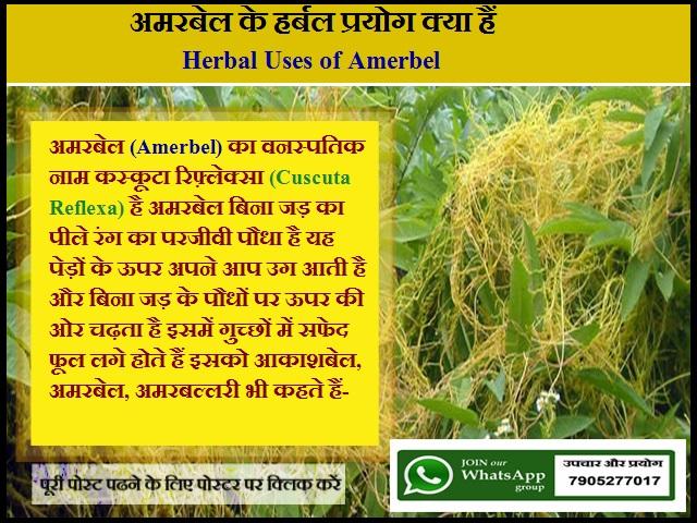 अमरबेल के हर्बल प्रयोग क्या हैं-Herbal Uses of Amerbel